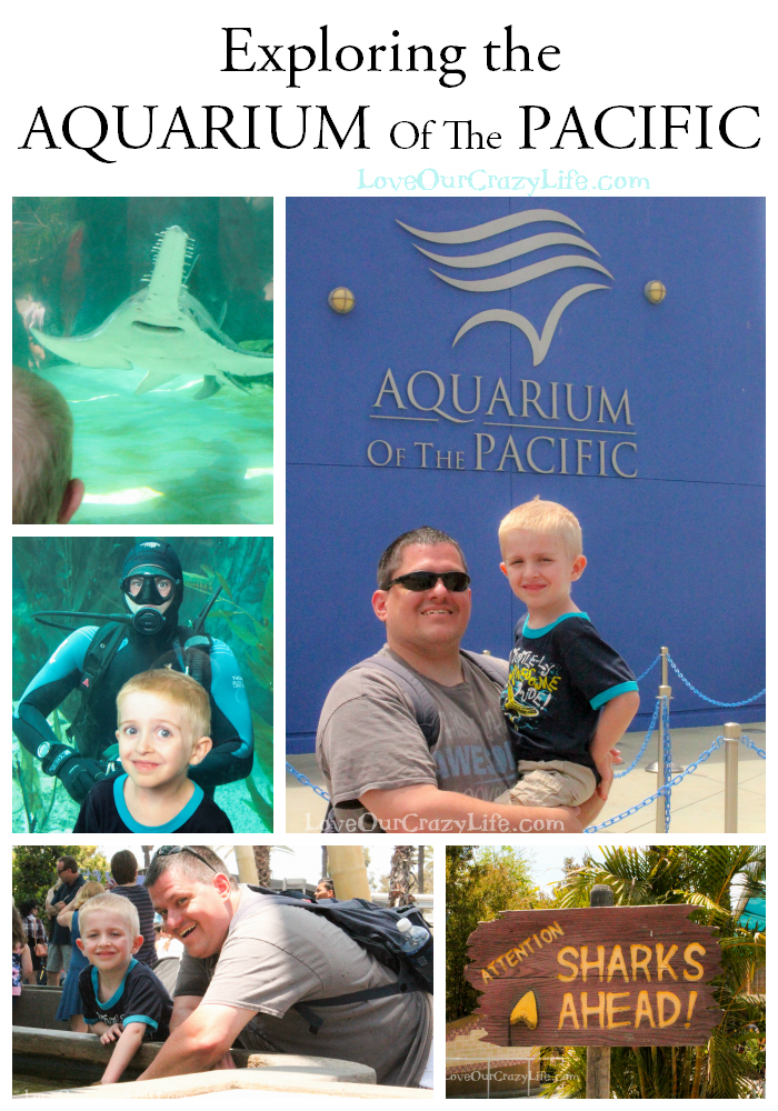 Visiting the Aquarium of the Pacific during your SoCal vacation