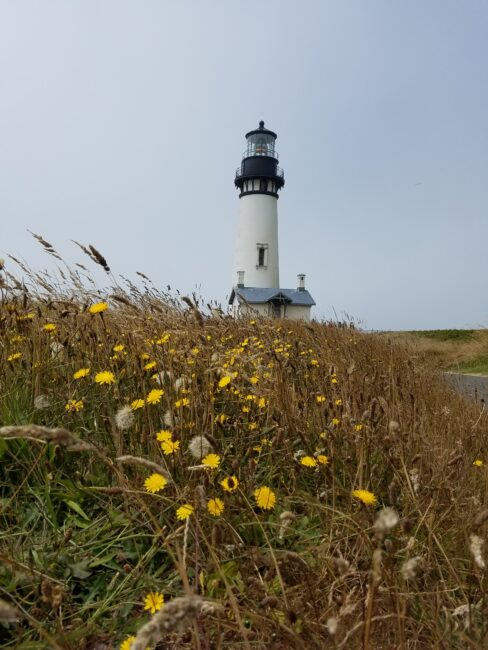 Oregon Coast Lighthouse Yaquina Head  in distance with wildflowers